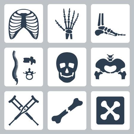 esqueleto: Vector aislados iconos esqueleto establecen