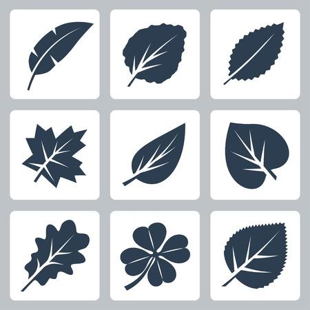 arbol alamo: �rbol del vector deja iconos conjunto