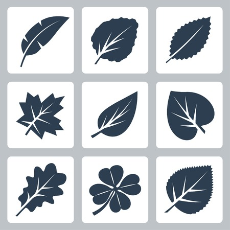 Vector tree leaves icons set Vector