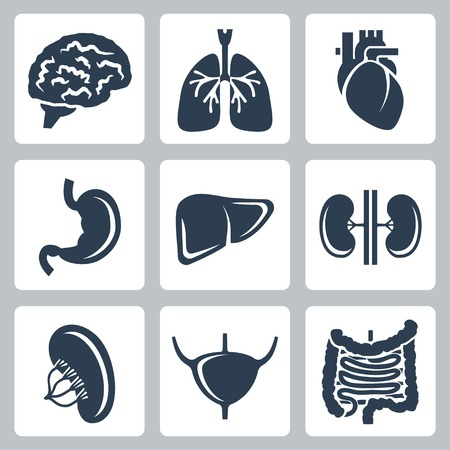 human internal organ: Vector internal organs icons set Illustration