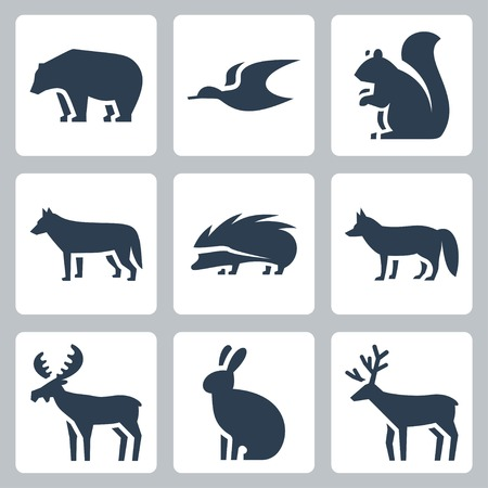 animales del bosque: animales del bosque iconos conjunto