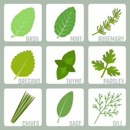 chive: Isolated herbs vector icons set