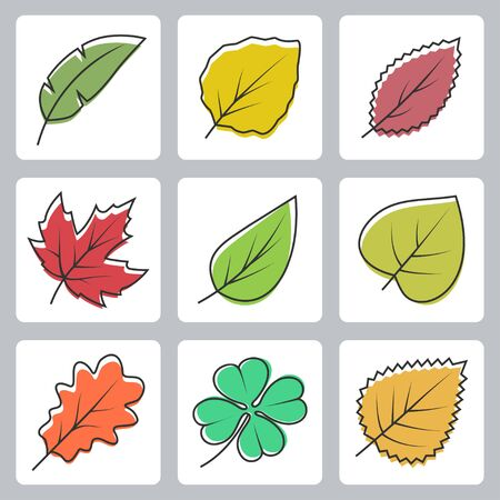 beech tree: Vector tree leaves icons set