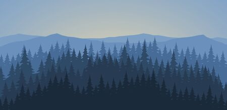 pine forest: Pine forest at dawn landscape background
