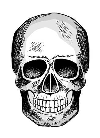Black and white sketch of human skull