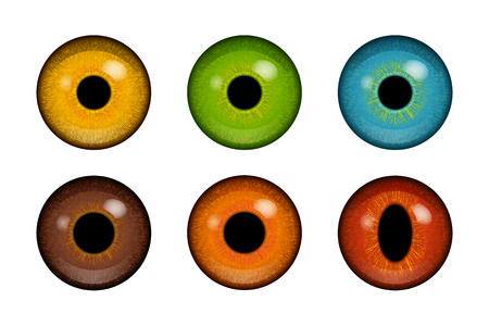 Colorful human and animal eyeballs Illustration