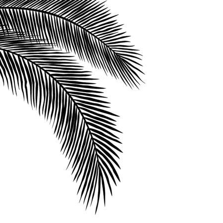 Palm Leaves Silhouettes Hanging at the Corner