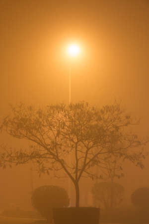 A tree under a streetlight in smog.