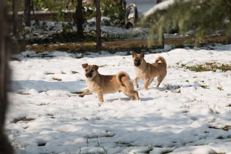 Two little dogs playing on the snow in a sunny day in grove. Stock fotó