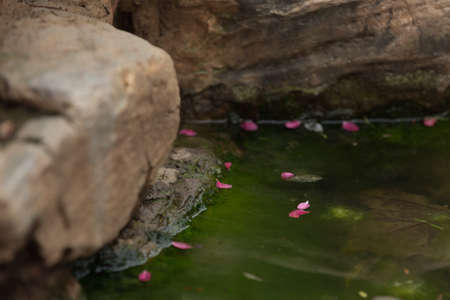 Purple red flower petals floating on water in corner. Stock fotó
