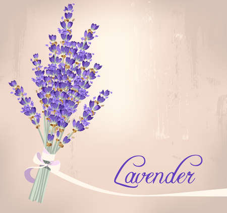 provence: Illustration of bouquet of lavender