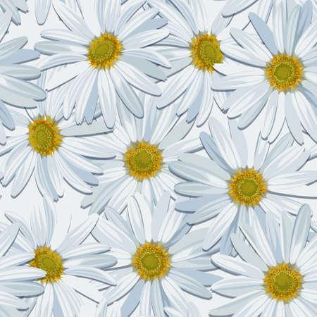 camomile: White camomile seamless realistic background