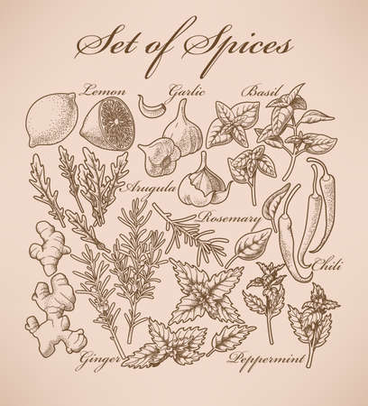 allspice: Set of various spices and herbs for cooking Illustration