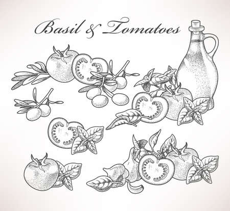 Set of basil and tomatoes hand drawn compositions