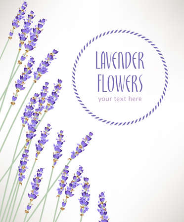 Composition made of lavender flowers with copy space