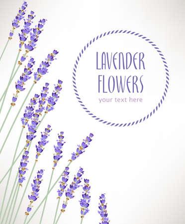 Composition faite de fleurs de lavande avec copie espace Banque d'images - 41116427