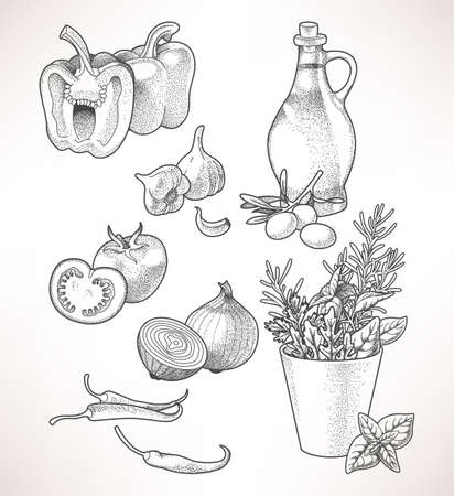 oilcan: Illustration of olive oil, vegetables and herbs