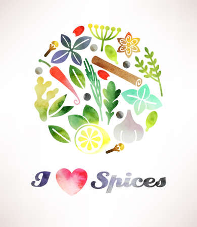 indian spices: Composition of various spices made in watercolor Illustration