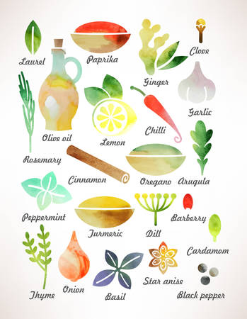 Set of various spices and herbs for cooking Ilustração