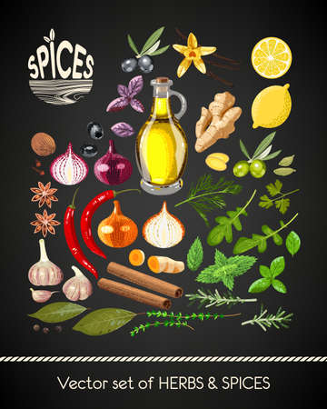 Vector set of different spices and herbs Illustration