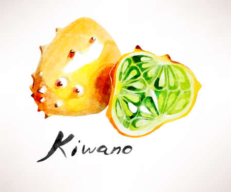 exotic fruit: Vector illustration of watercolor sliced exotic fruit