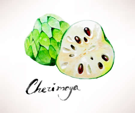 sliced fruit: Vector illustration of watercolor sliced exotic fruit