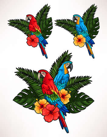 macaw: Illustration of macaw, hibiscus flowers and palm leaves