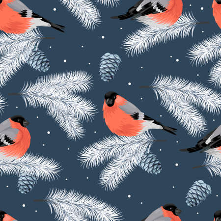 bullfinch: Bullfinch and branches of spruce seamless vector background Illustration