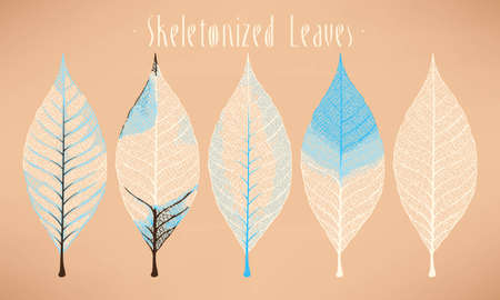Vector collection of white and light blue skeletonized leaves Фото со стока - 49798128
