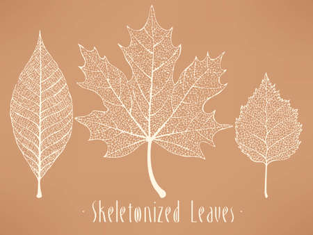 autumn leaves background: Vector collection of white and light blue skeletonized leaves