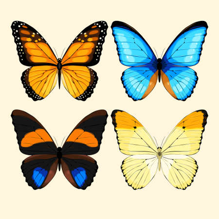 high detailed: Vector collection of realistic high detailed butterflies