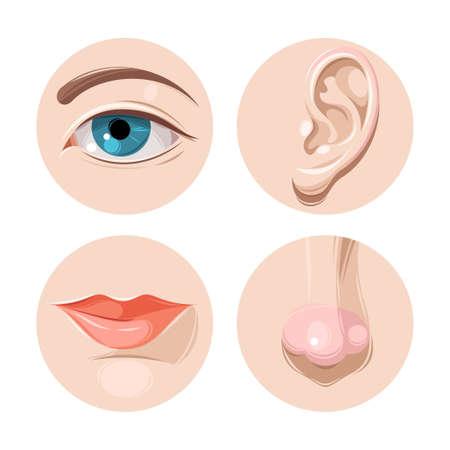 human eye: Vector illustration of human eye, ear, mouth and nose Illustration