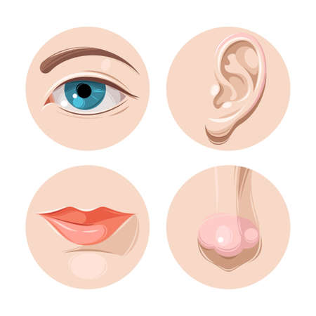 Vector illustration of human eye, ear, mouth and nose Vettoriali