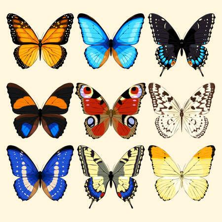 Insieme vettoriale di realistica alto farfalle dettagliate Vettoriali