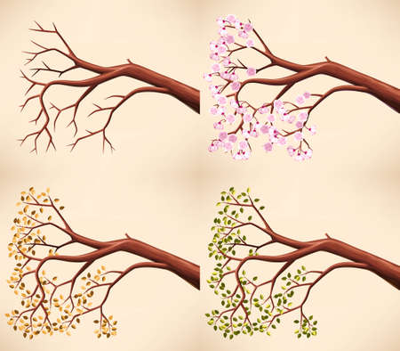 spring summer: illustration of tree branch in different seasons