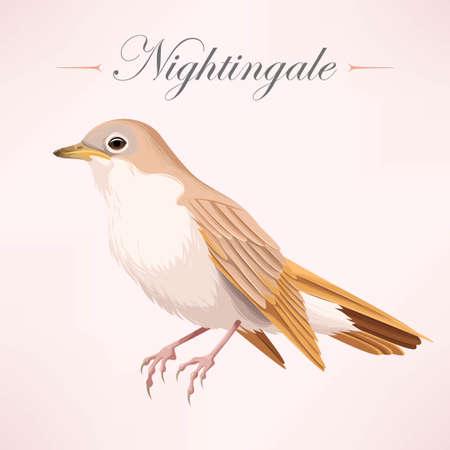 ruise�or: Vector illustration of vintage beautiful realistic nightingale