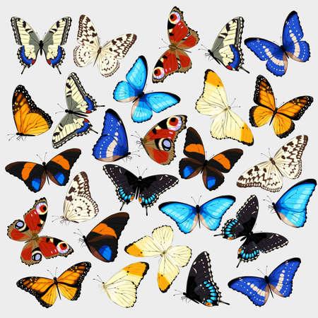 現実的な高詳細な蝶のベクトル コレクション