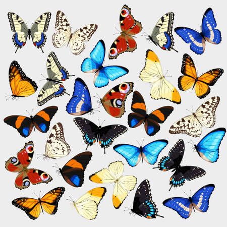 Vector collection of realistic high detailed butterflies