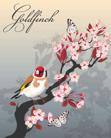 blooming: Vector illustration of branch of blooming cherry with goldfinch