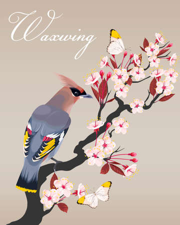 cherry branch: Vector illustration of waxwing on blooming cherry branch