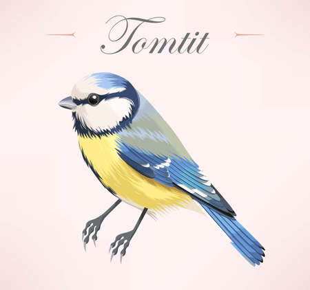 high detailed: Vector illustration of high detailed colorful tomtit