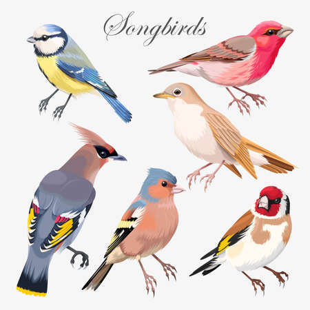 finch: Vector set of colorful high detailed songbirds
