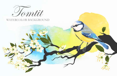 tomtit: illustration of tomtit on the blooming cherry branch on bright watercolor background Illustration