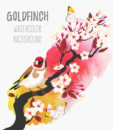 Vector illustration of branch of blooming cherry with goldfinch on watecolor background