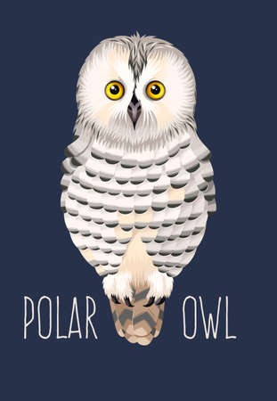 high detailed: illustration of high detailed cute polar owl