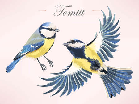 tomtit: Vector illustration of high detailed colorful tomtit