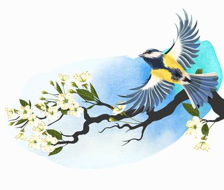tomtit: Vector illustration of flying tomtit on the blooming cherry branch on bright watercolor background