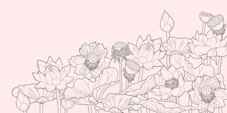 boll: Vector illustration of thickets of blooming and withered lotus Illustration