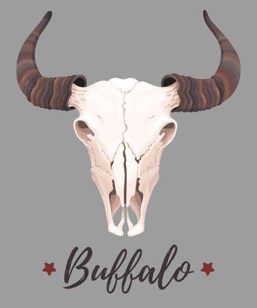 cherokee: Vector illustration of high detailed buffalo skull Illustration