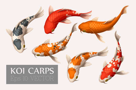fish pond: Vector set of beautiful and colorful koi carps